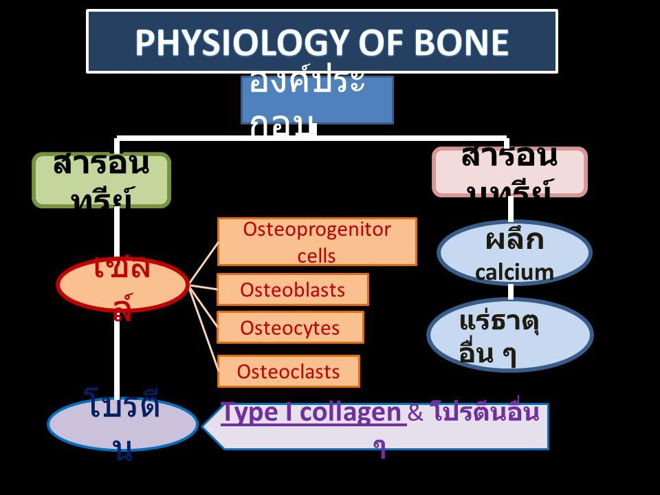 Physiology of bone องค์ประกอบ เซลล์ โปรตีน สารอนินทรีย์ สารอินทรีย์
