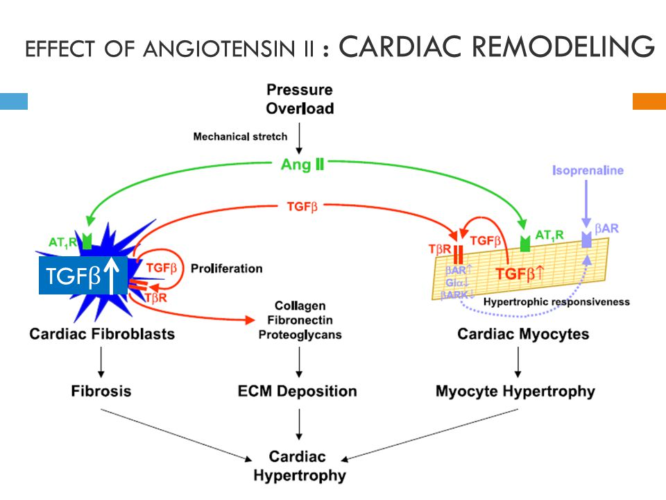 EFFECT OF ANGIOTENSIN II : CARDIAC REMODELING