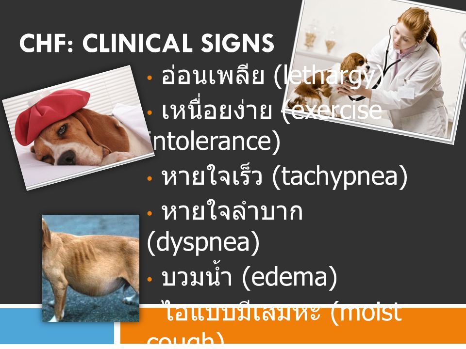 CHF: Clinical signs อ่อนเพลีย (lethargy)
