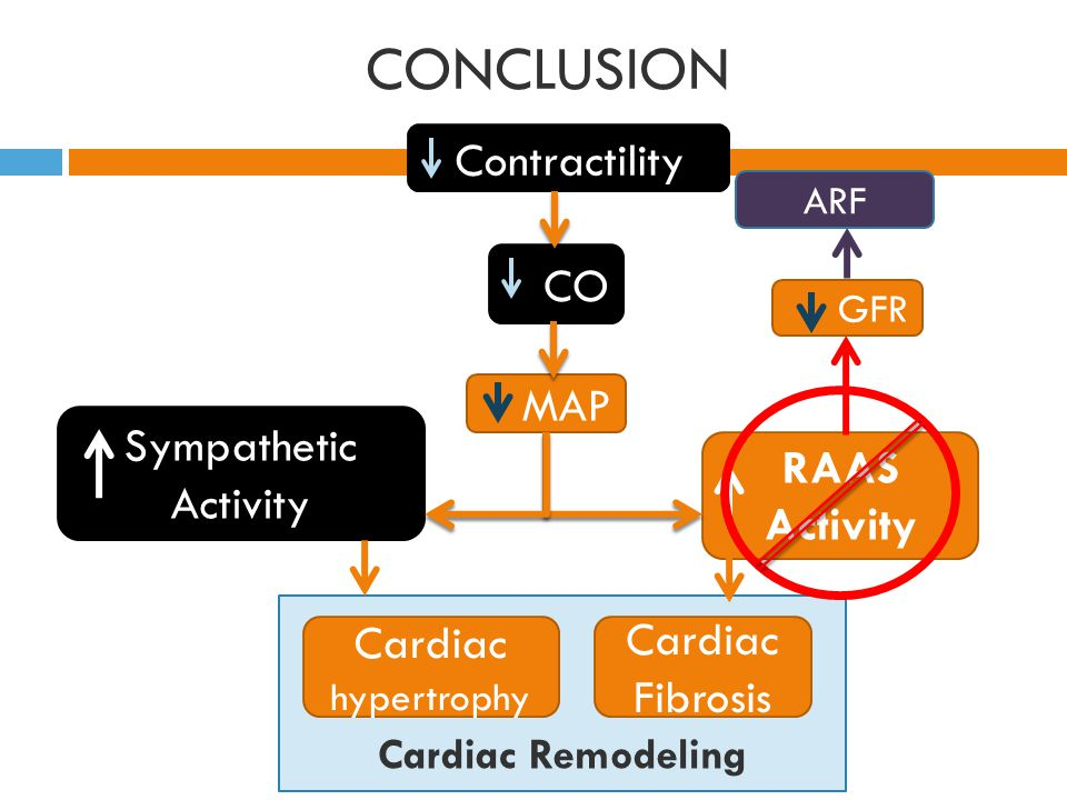 CONCLUSION Contractility CO MAP Sympathetic Activity RAAS Activity