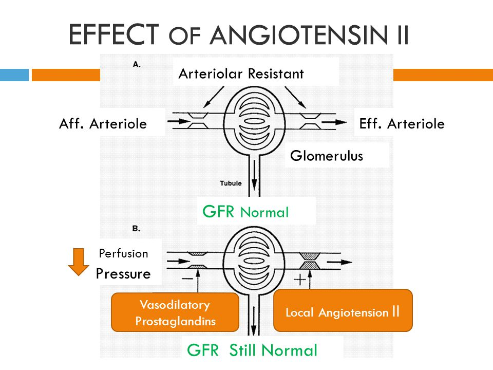 EFFECT OF ANGIOTENSIN II