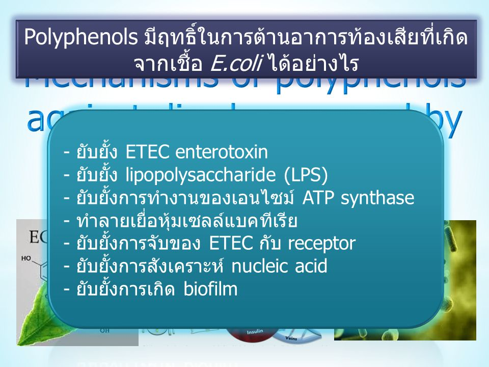 Mechanisms of polyphenols against diarrhea caused by E.coli