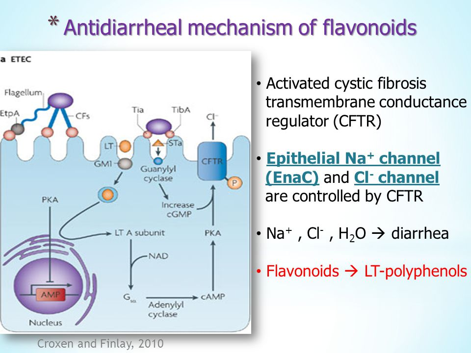 Antidiarrheal mechanism of flavonoids