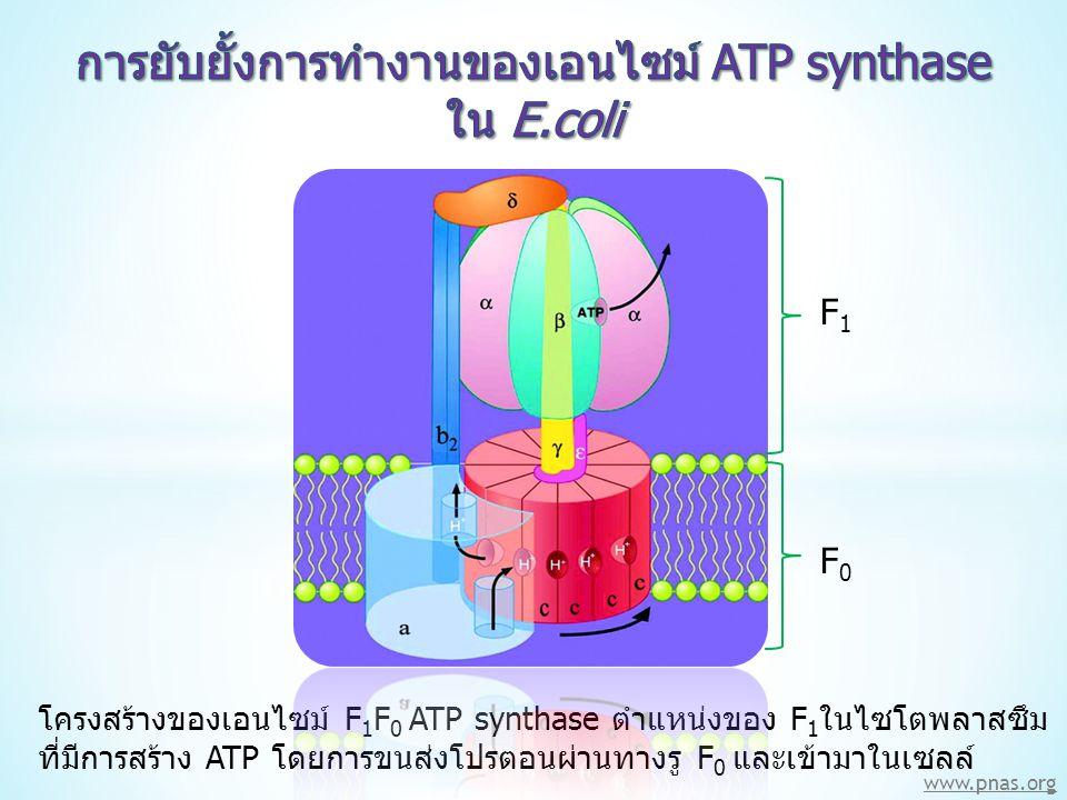 การยับยั้งการทำงานของเอนไซม์ ATP synthase
