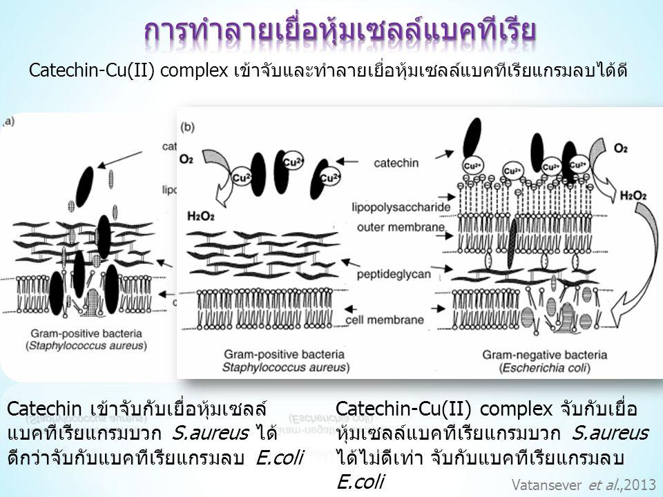 การทำลายเยื่อหุ้มเซลล์แบคทีเรีย