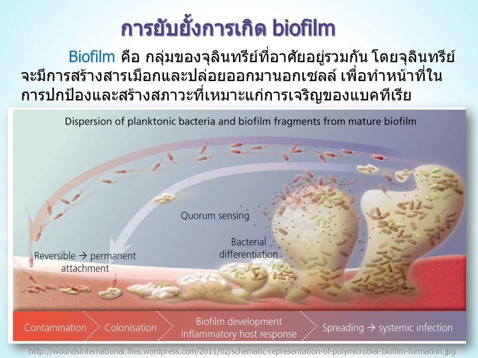 การยับยั้งการเกิด biofilm