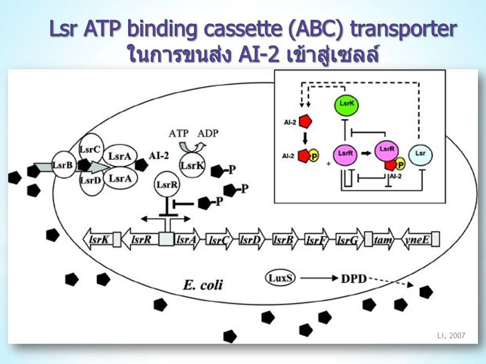 Lsr ATP binding cassette (ABC) transporter