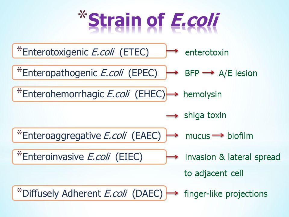 Strain of E.coli Enterotoxigenic E.coli (ETEC) enterotoxin
