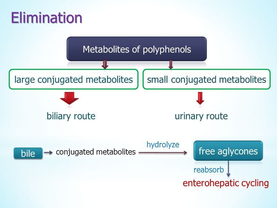 Elimination Metabolites of polyphenols large conjugated metabolites