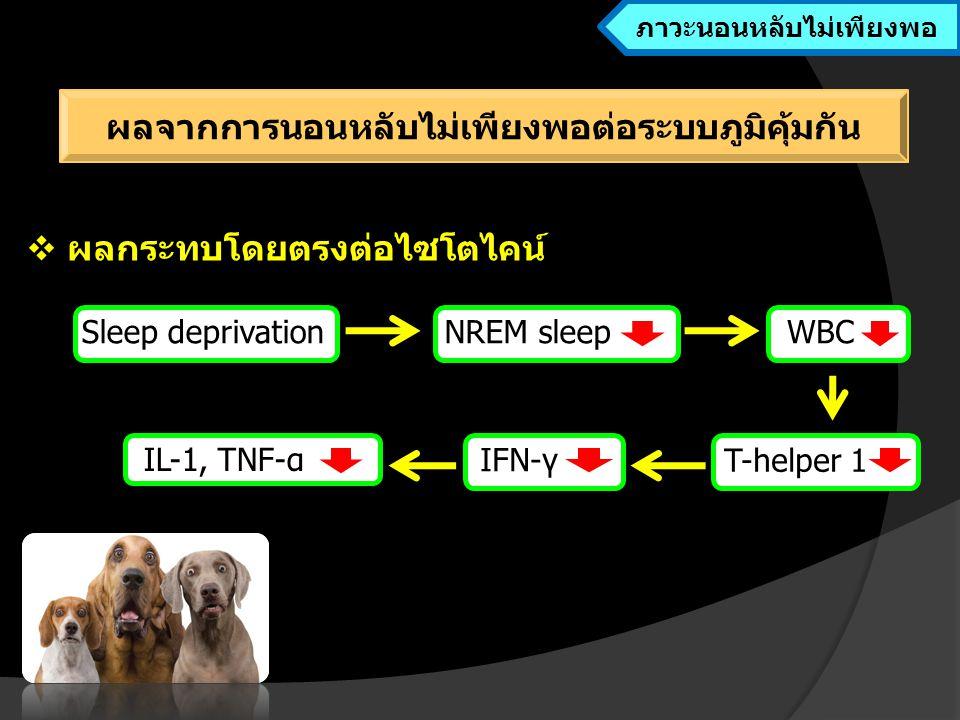 ภาวะนอนหลับไม่เพียงพอ ผลจากการนอนหลับไม่เพียงพอต่อระบบภูมิคุ้มกัน
