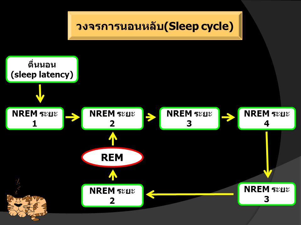 วงจรการนอนหลับ(Sleep cycle)