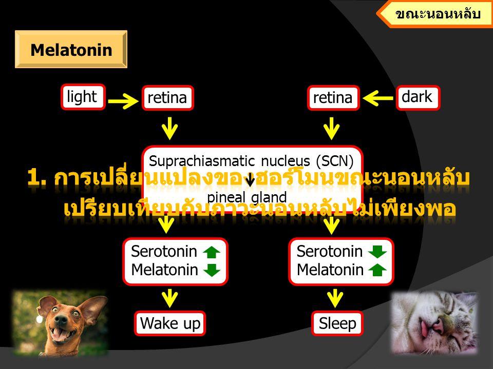 1. การเปลี่ยนแปลงของฮอร์โมนขณะนอนหลับ