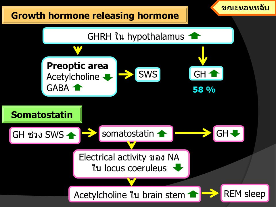 Growth hormone releasing hormone