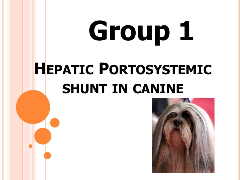 Hepatic Portosystemic shunt in canine