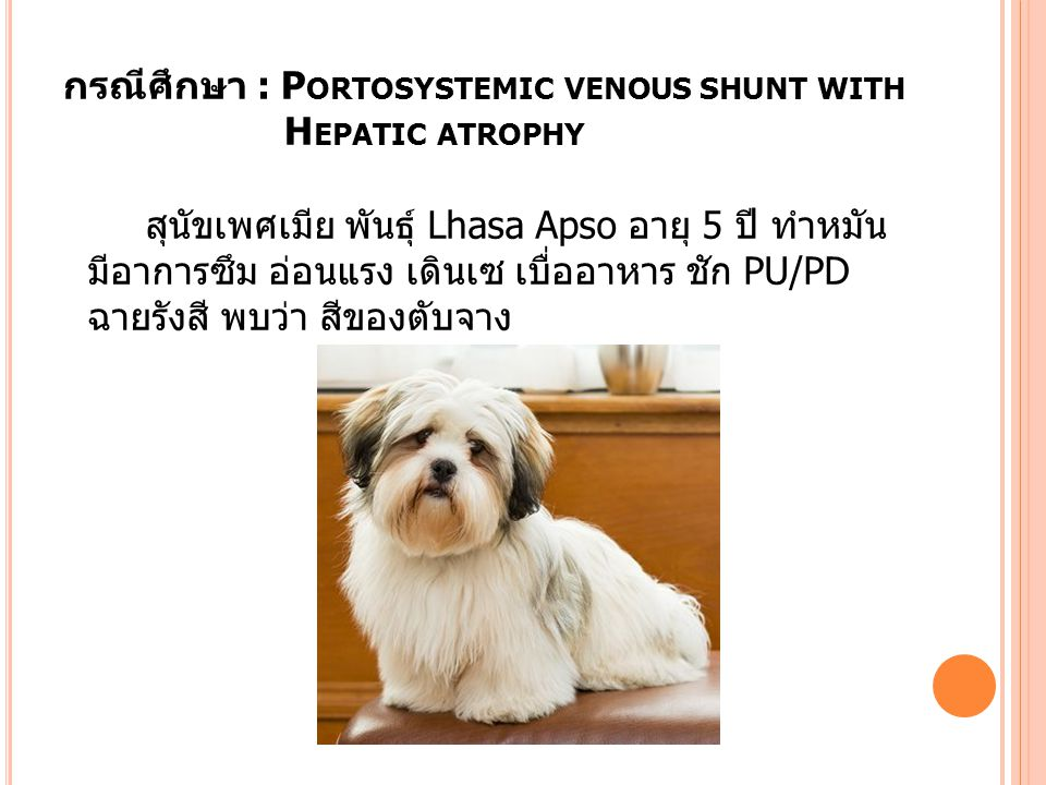 กรณีศึกษา : Portosystemic venous shunt with Hepatic atrophy