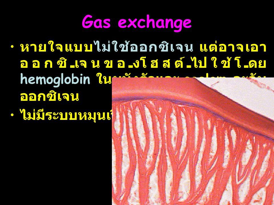 Gas exchange หายใจแบบไม่ใช้ออกซิเจน แต่อาจเอาออกซิเจนของโฮสต์ไปใช้โดย hemoglobin ในผนังตัวและ coelom จะจับออกซิเจน.
