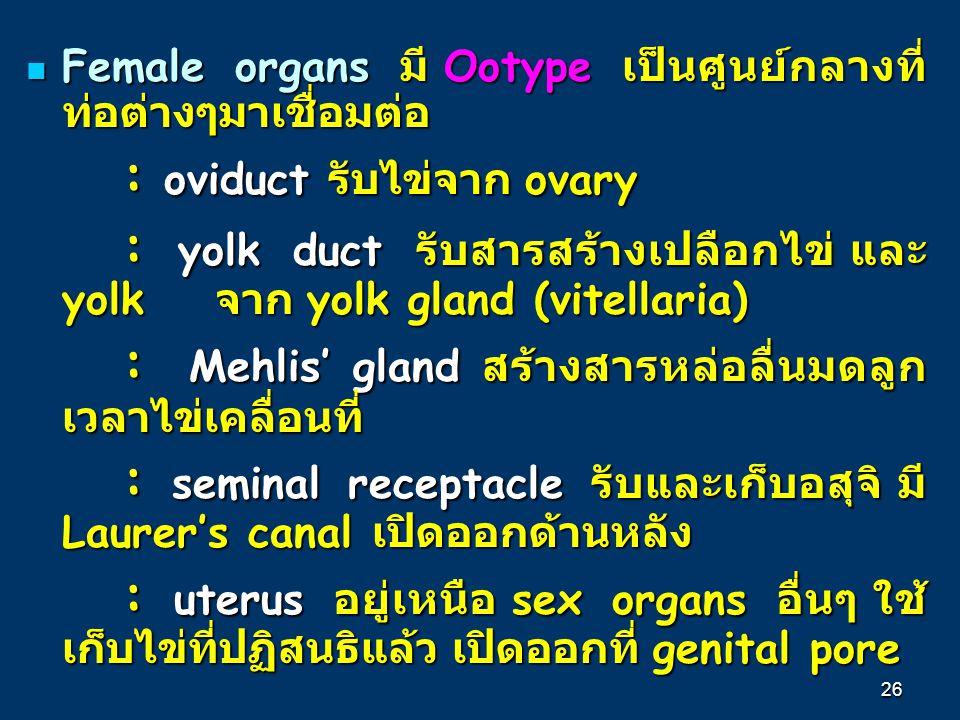 : oviduct รับไข่จาก ovary