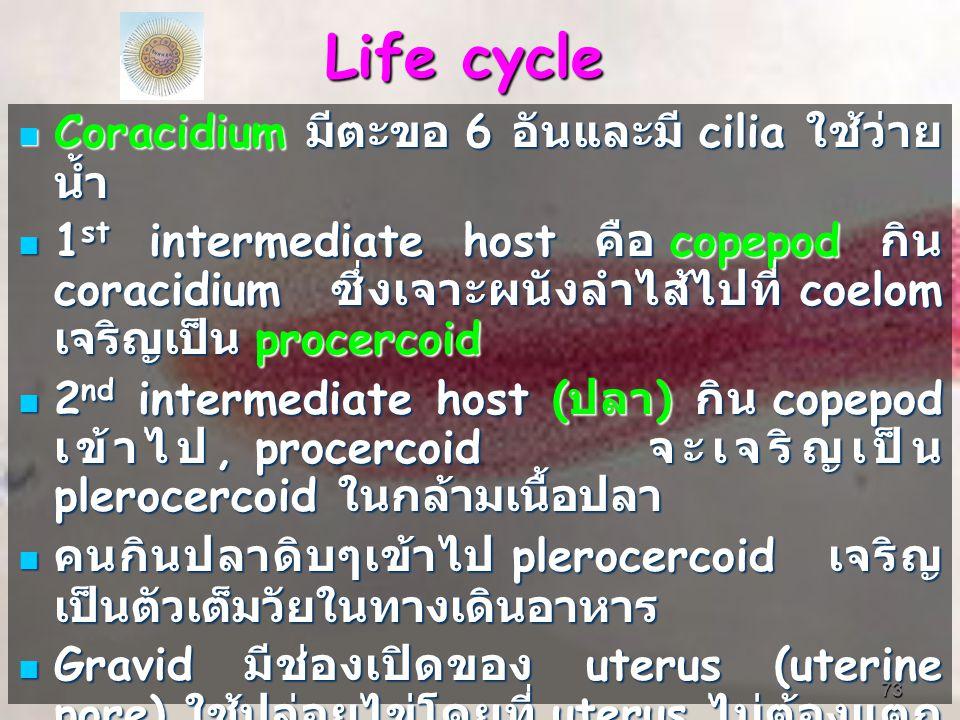 Life cycle Coracidium มีตะขอ 6 อันและมี cilia ใช้ว่ายน้ำ