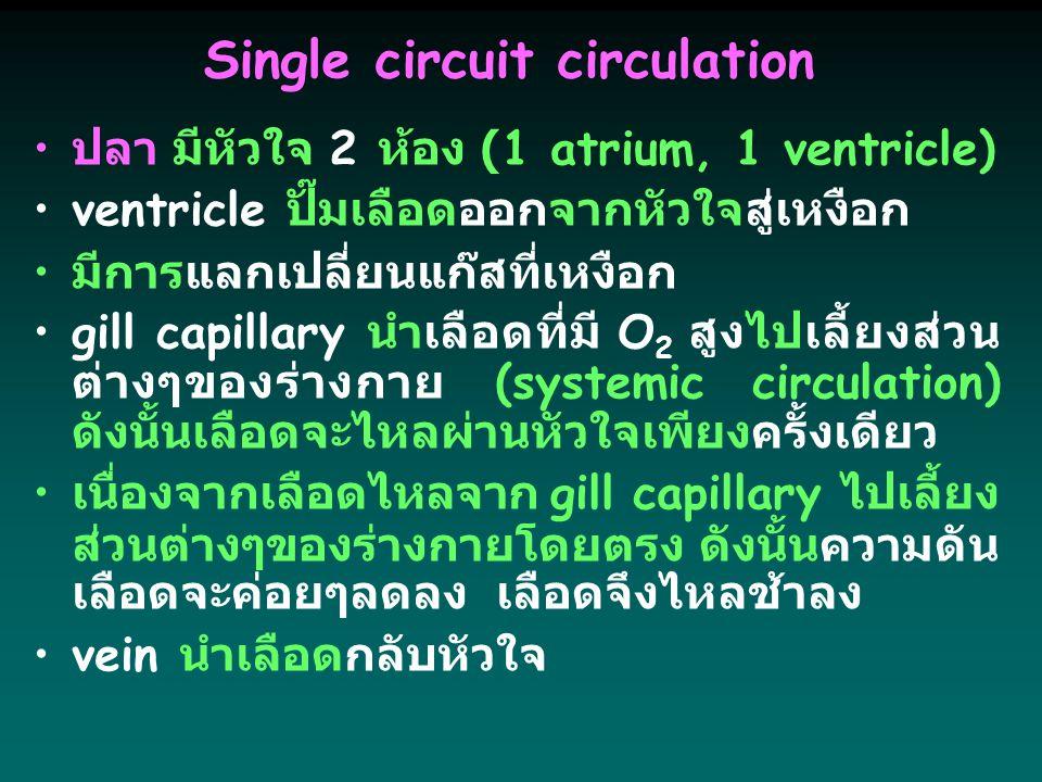 Single circuit circulation