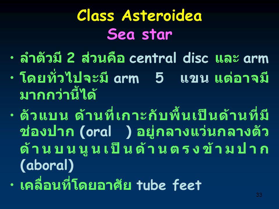 Class Asteroidea Sea star