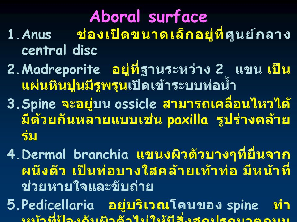 Aboral surface Anus ช่องเปิดขนาดเล็กอยู่ที่ศูนย์กลาง central disc