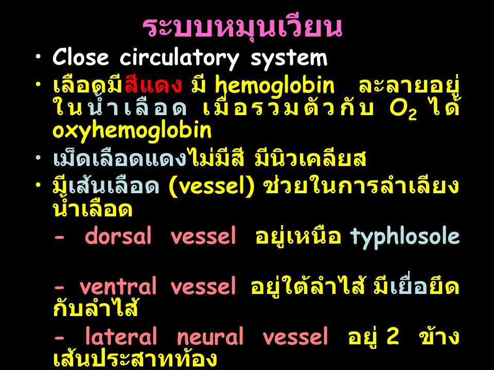 ระบบหมุนเวียน Close circulatory system