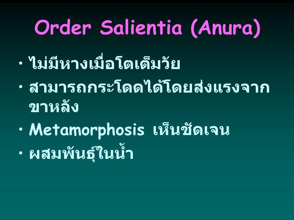 Order Salientia (Anura)
