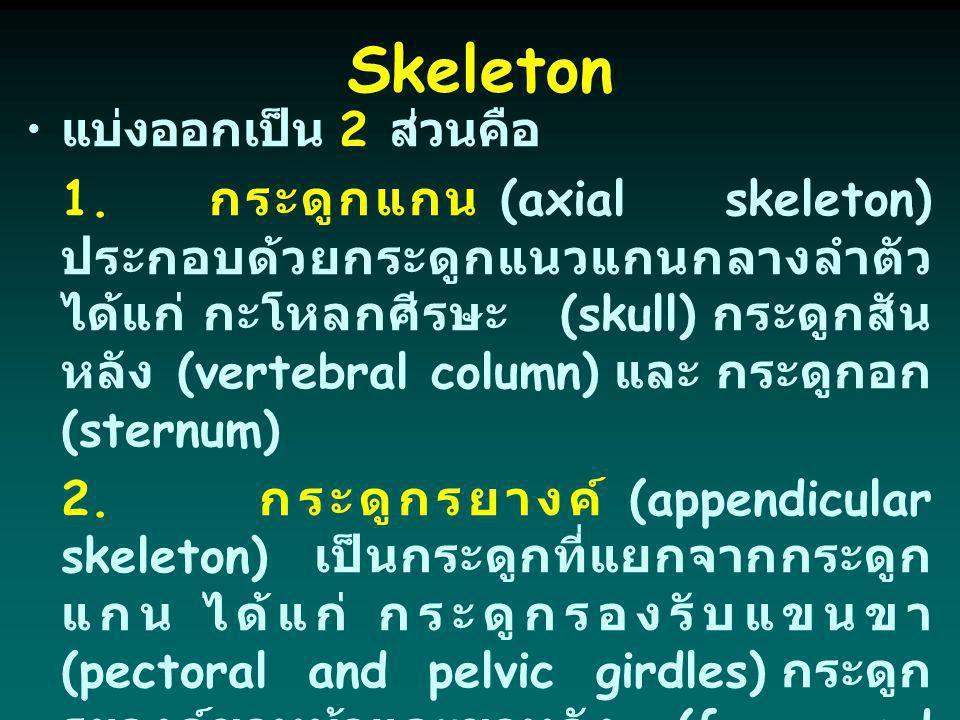 Skeleton แบ่งออกเป็น 2 ส่วนคือ