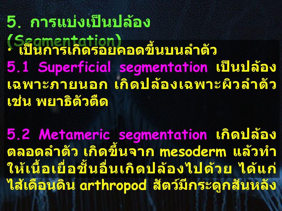 5. การแบ่งเป็นปล้อง (Segmentation)
