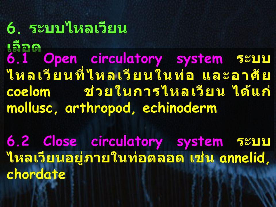 6. ระบบไหลเวียนเลือด 6.1 Open circulatory system ระบบไหลเวียนที่ไหลเวียนในท่อ และอาศัย coelom ช่วยในการไหลเวียน ได้แก่ mollusc, arthropod, echinoderm.