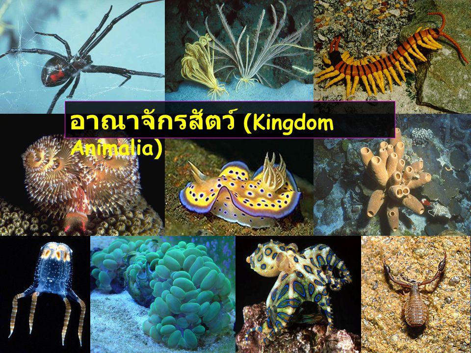 อาณาจักรสัตว์ (Kingdom Animalia)
