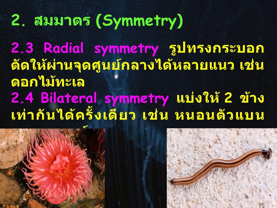 2. สมมาตร (Symmetry) 2.3 Radial symmetry รูปทรงกระบอก ตัดให้ผ่านจุดศูนย์กลางได้หลายแนว เช่น ดอกไม้ทะเล.