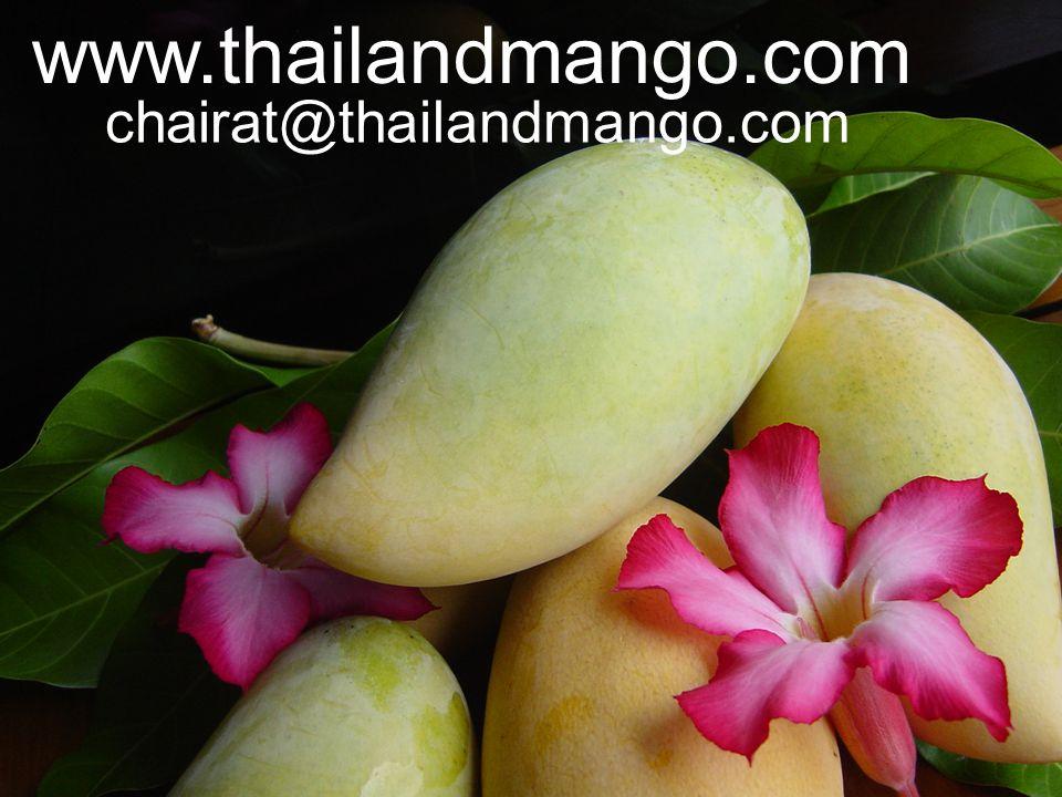 www.thailandmango.com chairat@thailandmango.com