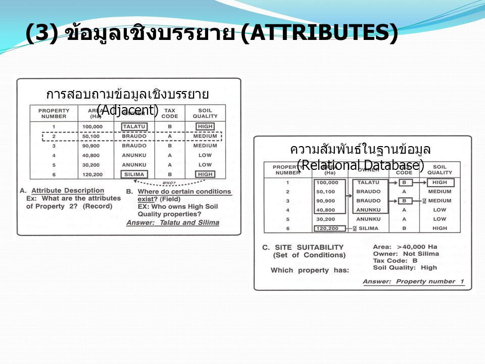 (3) ข้อมูลเชิงบรรยาย (ATTRIBUTES)