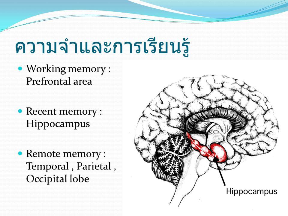ความจำและการเรียนรู้