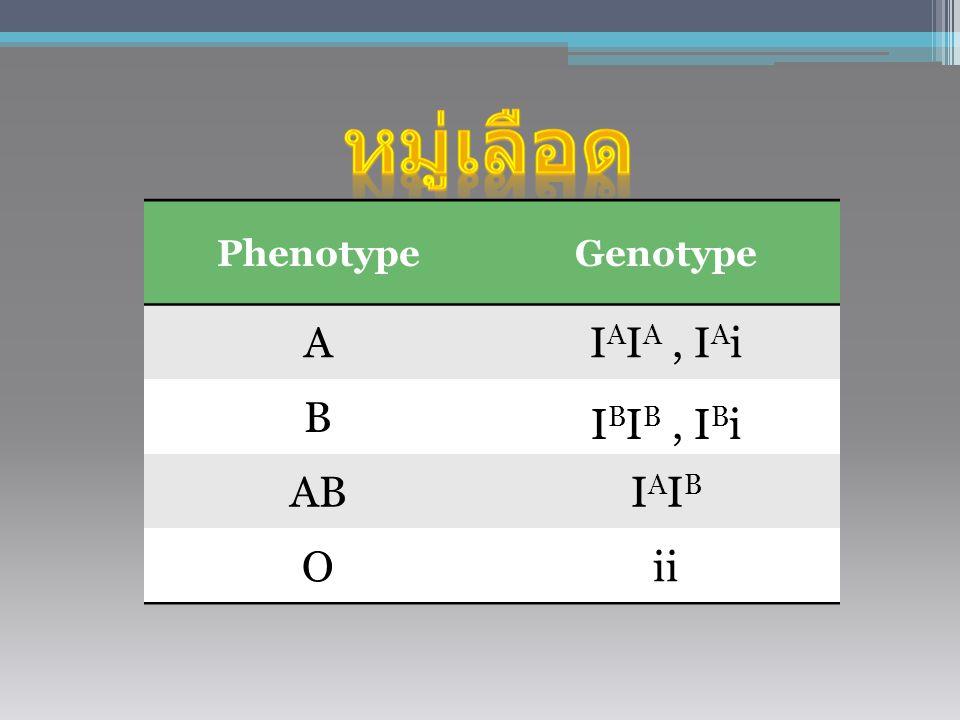 หมู่เลือด Phenotype Genotype A IAIA , IAi B IBIB , IBi AB IAIB O ii