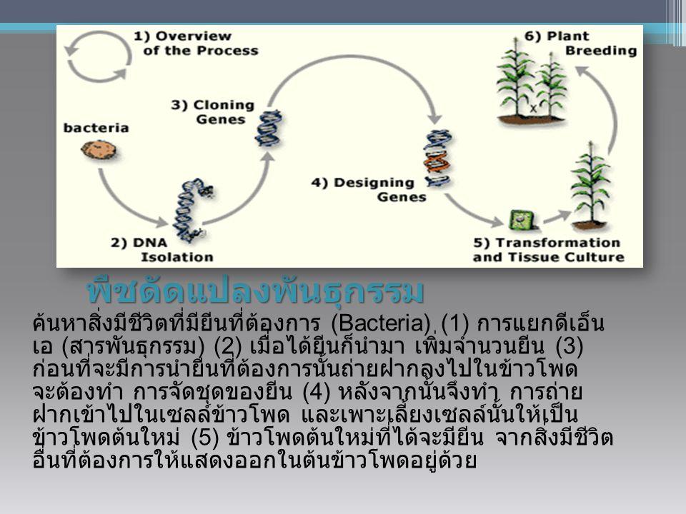 พืชดัดแปลงพันธุกรรม