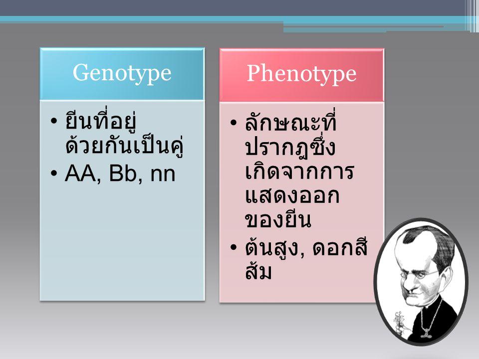 Genotype ยีนที่อยู่ด้วยกันเป็นคู่ AA, Bb, nn. Phenotype. ลักษณะที่ปรากฎซึ่งเกิดจากการแสดงออกของยีน.