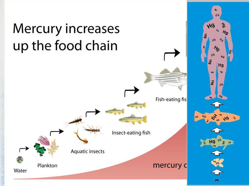 เมทิลเมอร์คิวรี่ (Methylmercury)