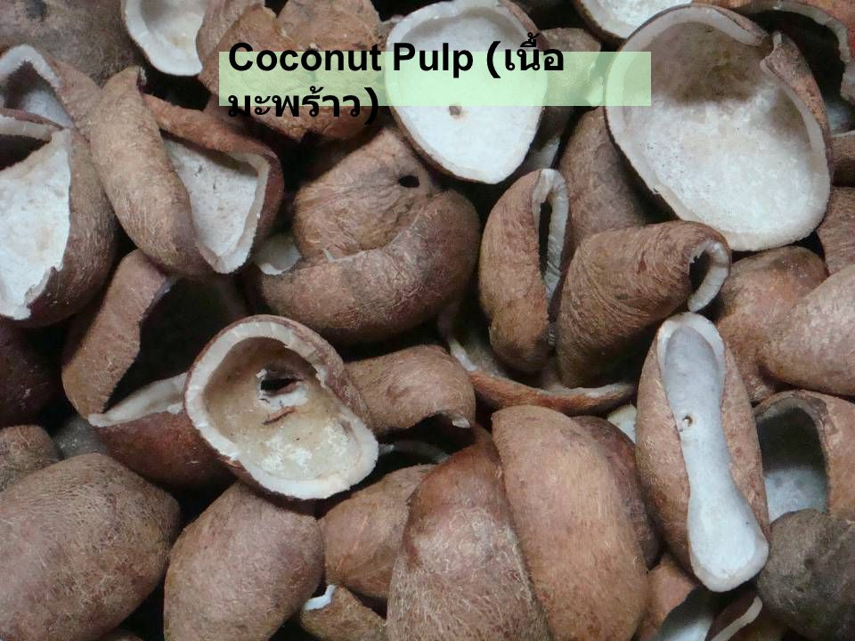 Coconut Pulp (เนื้อมะพร้าว)