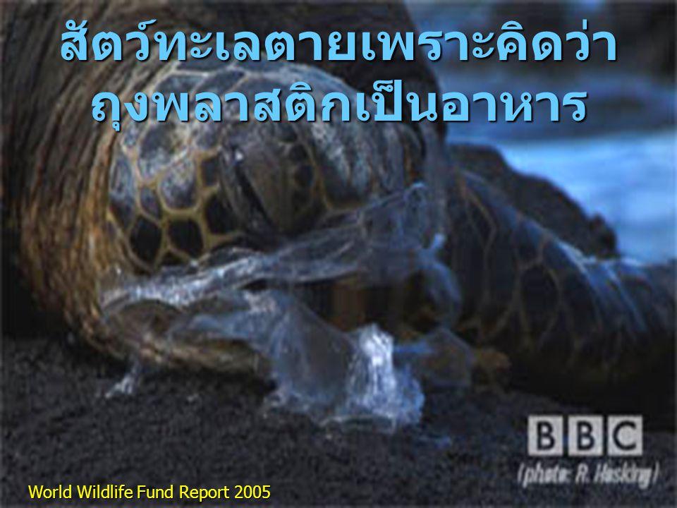 สัตว์ทะเลตายเพราะคิดว่าถุงพลาสติกเป็นอาหาร