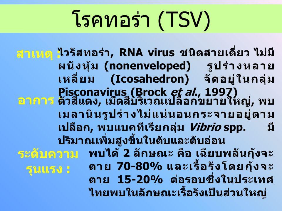 โรคทอร่า (TSV) สาเหตุ : อาการ : ระดับความรุนแรง :