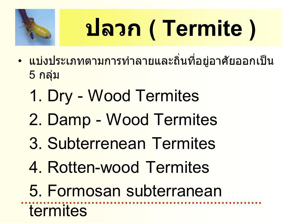 ปลวก ( Termite ) 2. Damp - Wood Termites 3. Subterrenean Termites