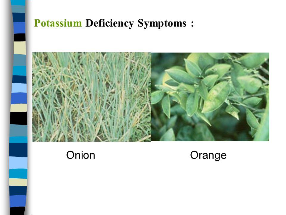 Potassium Deficiency Symptoms :