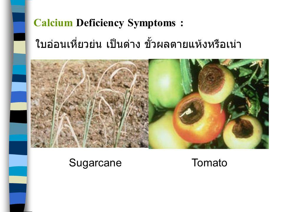 Calcium Deficiency Symptoms :