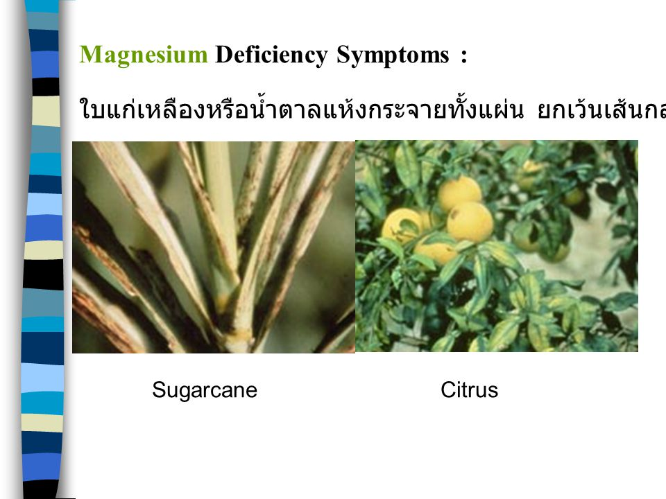 Magnesium Deficiency Symptoms :
