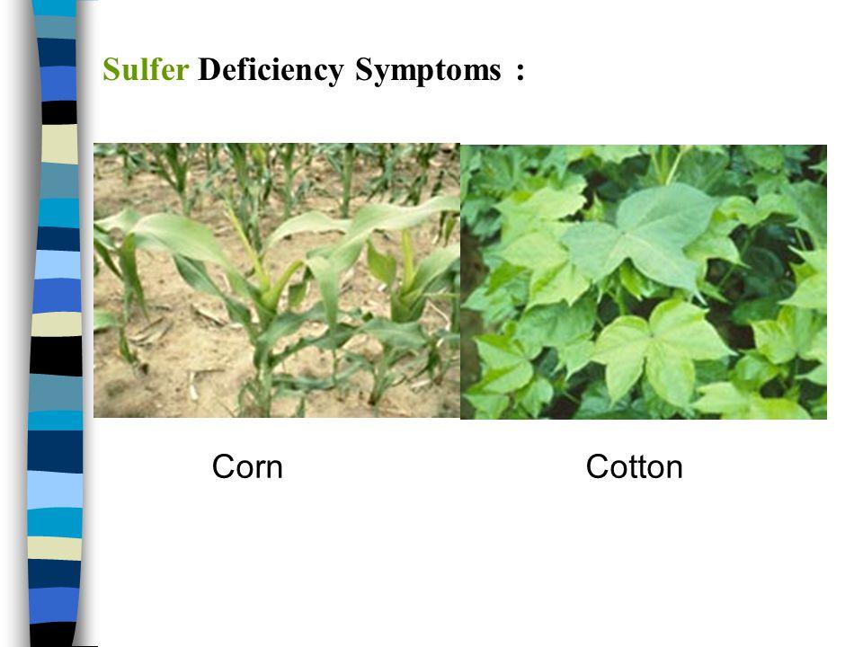 Sulfer Deficiency Symptoms :