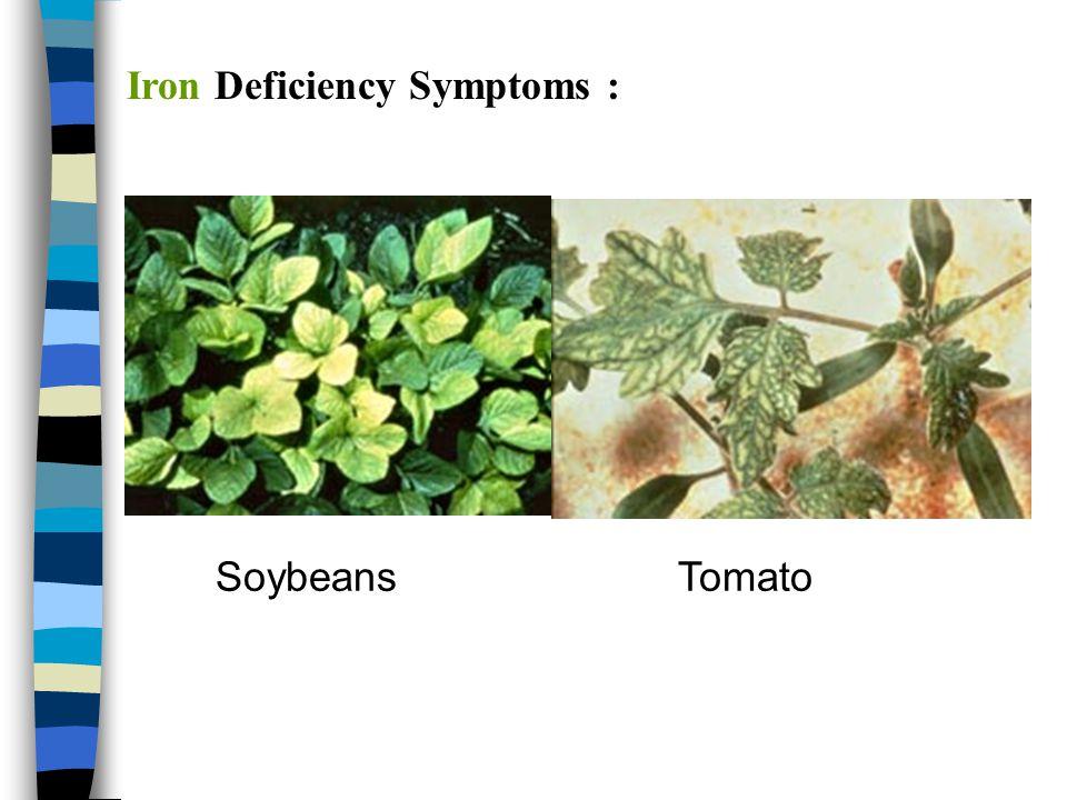 Iron Deficiency Symptoms :