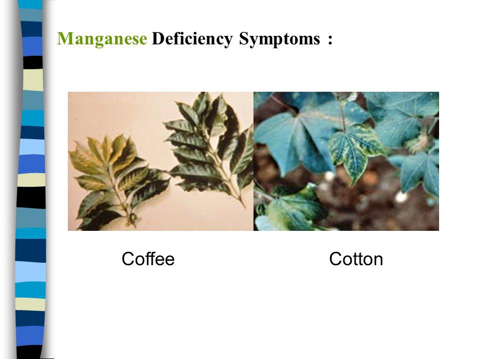 Manganese Deficiency Symptoms :