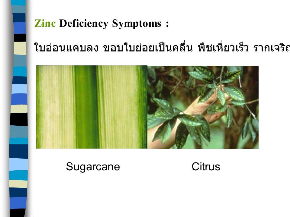 Zinc Deficiency Symptoms :